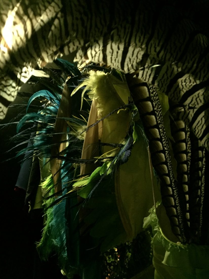 Feathered costumes